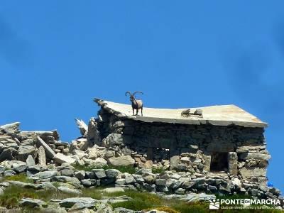 El Morezón - Sierra de Gredos; fines de semana; senderismo madrid;beneficios para la salud